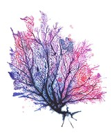 Sea Fan - Purple Fine Art Print