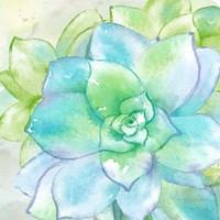 Sweet Succulents II Framed Print