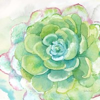 Sweet Succulents IV Fine Art Print