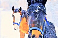 Snow Horses Fine Art Print