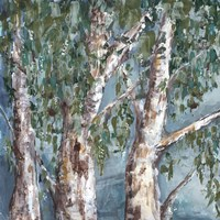 Eucalyptus Trees Fine Art Print