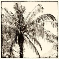 Palm Tree Sepia III Fine Art Print
