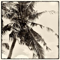 Palm Tree Sepia II Fine Art Print