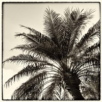 Palm Tree Sepia I Fine Art Print