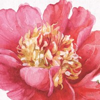 Pink Garden V Fine Art Print