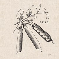 Burlap Vegetable BW Sketch Peas Fine Art Print