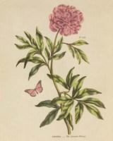 Herbal Botany XXIV Butterfly Crop Fine Art Print