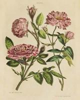Herbal Botany XVIII v2 Crop Fine Art Print
