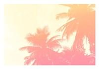 Coconut Palm Trees Fine Art Print