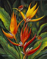 Heliconia Augusta Fine Art Print