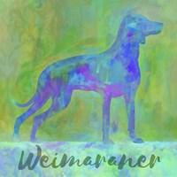Weimaraner Dog Fine Art Print