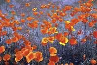 Wild Flowers Field Fine Art Print