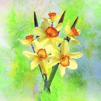Daffodil Flowers Fine Art Print