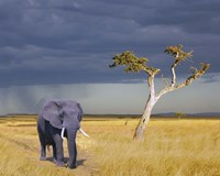 Elephant Walking Fine Art Print