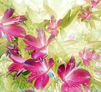 The Lily Garden Fine Art Print