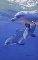 Dolphin Smile Fine Art Print