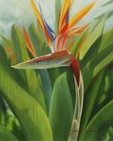 Paradise 2 Fine Art Print