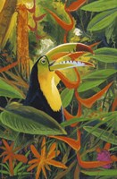 Toucan Colors Fine Art Print