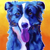 Border Collie - Jinx Fine Art Print