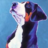 Swissie - Puppy Fine Art Print