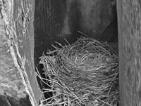 Robin's Nest Fine Art Print