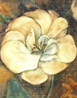 Cream Flower 2 Fine Art Print