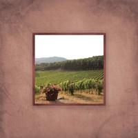 Tuscan Vineyard II Fine Art Print