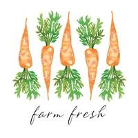 Farm Fresh Carrots Fine Art Print
