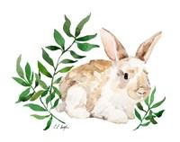 Tan Bunny Rabbit Fine Art Print
