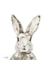 Grey Bunny Fine Art Print