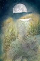 Moonlight Path Fine Art Print