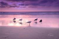 Seagull Beach I Fine Art Print