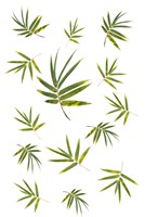 Bamboo Leaf Collection Fine Art Print
