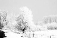 Winter Scene Fine Art Print