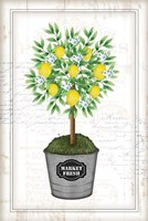 Lemon Topiary Fine Art Print