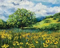 Oklahoma Natural Fine Art Print