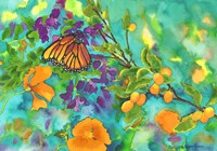 California Monarch Fine Art Print