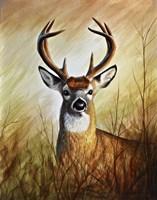 Backwoods Monarch Fine Art Print