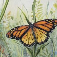 Botanical Beauties A Fine Art Print