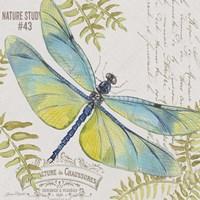 Botanical Dragonfly D Fine Art Print
