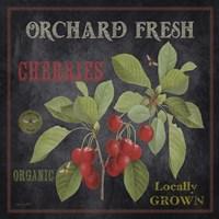 Orchard Fresh Cherries Framed Print