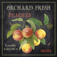 Orchard Fresh Peaches Fine Art Print
