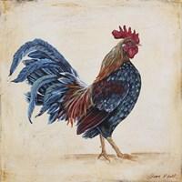 Rooster - C Framed Print