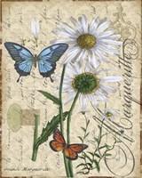 Botanical - Daisey Grande Marqueritte Damask Fine Art Print