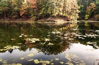 Autumn Lakeside View Of Forest Fine Art Print