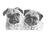 Pugs Fine Art Print