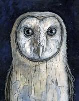 Barn Owl I Fine Art Print