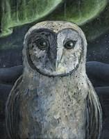 Barn Owl II Fine Art Print
