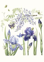 Iris & Wisteria Fine Art Print