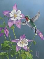 Summer Hummingbird Fine Art Print
